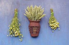 Grupo e trigos médicos da flor de duas camomilas na parede de madeira fotografia de stock