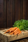 Grupo em cenouras alaranjadas frescas na caixa de madeira Imagens de Stock Royalty Free