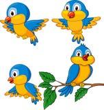 Grupo engraçado dos desenhos animados do pássaro Imagens de Stock Royalty Free