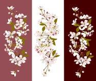 Grupo floral Fotos de Stock Royalty Free