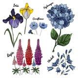 Grupo floral do vetor Imagens de Stock Royalty Free