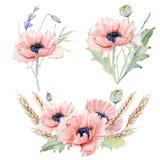 Grupo floral do vintage da aquarela ilustração stock