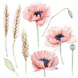 Grupo floral do vintage da aquarela Fotos de Stock
