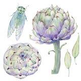 Grupo floral do vintage da aquarela Imagem de Stock Royalty Free