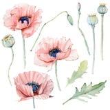 Grupo floral do vintage da aquarela Foto de Stock Royalty Free