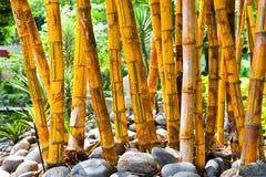 Grupo fresco del bambu en el jardín foto de archivo libre de regalías