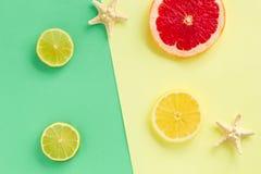 Grupo fresco tropical do ver?o Projeto da forma Citrino do fruto e estrelas de mar O art minimalism opini?o superior da forma O v fotografia de stock