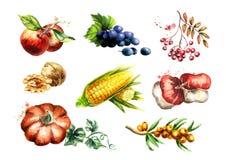 Grupo grande da colheita do outono Ilustração da aguarela ilustração stock