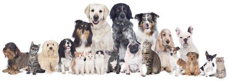 Grupo grande de animais de estimação fotografia de stock