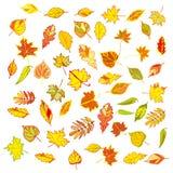 Grupo grande de folhas de outono coloridas Imagem de Stock Royalty Free