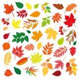 Grupo grande de folhas de outono coloridas bonitas Elementos do projeto no fundo branco Ilustração do vetor Fotografia de Stock Royalty Free