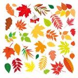 Grupo grande de folhas de outono coloridas bonitas Elementos do projeto no fundo branco Ilustração do vetor Imagem de Stock