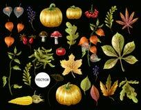 Grupo grande de folhas de outono, de frutos, de bagas e de vegetais Ilustração do vetor ilustração royalty free
