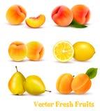 Grupo grande de frutas amarillas y anaranjadas Imagen de archivo