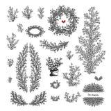Grupo grande de galhos e de ramos tirados mão do vetor com folhas ilustração stock