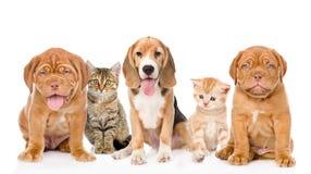 Grupo grande de gatos y de perros que se sientan en frente Aislado en blanco Foto de archivo