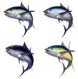 Grupo grande de ilustração realística isolada dos peixes de atum ilustração royalty free