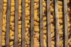 Grupo grande de maíz industrial Foto de archivo libre de regalías