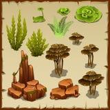 Grupo grande de plantas e de pedras subaquáticas da variedade Imagem de Stock Royalty Free