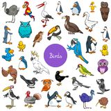 Grupo grande dos caráteres animais dos pássaros dos desenhos animados Foto de Stock Royalty Free