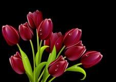 Grupo grande dos tulips Fotografia de Stock Royalty Free