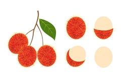 Grupo isolado do rambutan fruto fresco no fundo branco ilustração do vetor