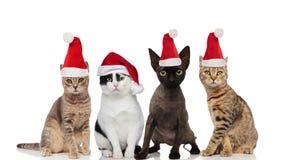 Grupo lindo de cuatro gatos de santa de diversas razas fotografía de archivo libre de regalías
