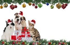 Grupo lindo del animal doméstico en la Navidad Fotografía de archivo libre de regalías