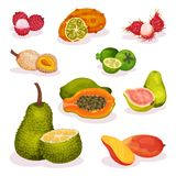 Grupo liso detalhado do vetor de vários frutos exóticos Nutrição do vegetariano Alimento orgânico e saboroso Comer saudável ilustração stock