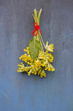 Grupo médico da flor da prímula na parede de madeira azul velha imagem de stock