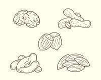 Grupo Nuts do ícone Imagem de Stock