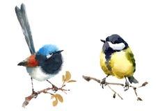 Grupo pintado à mão feericamente da ilustração da aquarela dos pássaros da carriça e do melharuco dois isolado no fundo branco Fotos de Stock