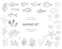 Grupo preto e branco do vetor de peixes, escudos do mar, algas isoladas no fundo branco ilustração do vetor
