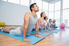 Grupo que faz a pose da cobra na fileira na classe da ioga Imagem de Stock