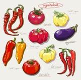 Grupo realístico do desenho da mão de vegetais Fotos de Stock