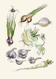 Grupo realístico do desenho da mão de vegetais Imagem de Stock