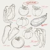 Grupo realístico do desenho da mão de vegetais Imagens de Stock