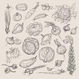 Grupo realístico do desenho da mão de vegetais Imagem de Stock Royalty Free