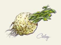 Grupo realístico do desenho da mão do vetor de vegetais Imagem de Stock