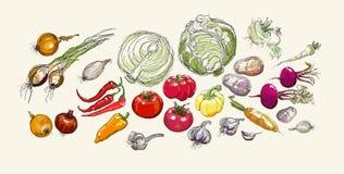 Grupo realístico do desenho da mão do vetor de vegetais Fotografia de Stock Royalty Free
