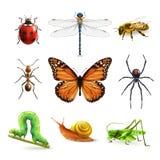 Grupo realístico dos insetos Fotografia de Stock Royalty Free