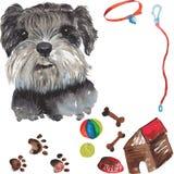 Grupo - retrato do cão do schnauzer diminuto, assim como acessórios Fotos de Stock Royalty Free