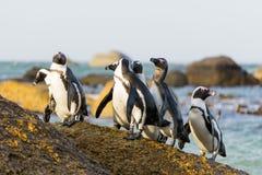 Grupo rock do pinguim imagem de stock royalty free