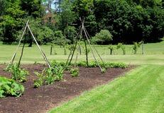 Grupo saudável do jardim no meio do gramado ajardinado Foto de Stock Royalty Free