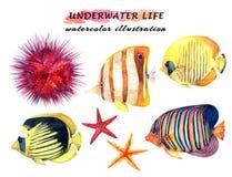 Grupo subaquático da vida - peixes, estrela do mar e diabrete de mar tropicais ilustração royalty free