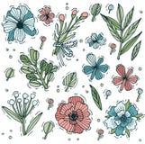 Grupo tirado mão colorido da erva e da flor Flores gravadas do estilo Ilustração do vetor ilustração stock