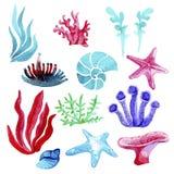 Grupo tirado mão da aquarela de corais dos elementos e de estrelas do mar naturais subaquáticos, estações de tratamento de água,  ilustração do vetor