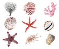 Grupo tirado m?o da aquarela de escudos e de moluscos isolados ilustração do vetor