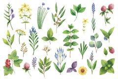 Grupo tirado mão da aquarela do vetor de ervas e de especiarias ilustração royalty free