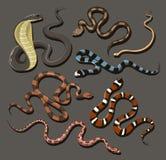 Grupo tirado mão da serpente ilustração stock